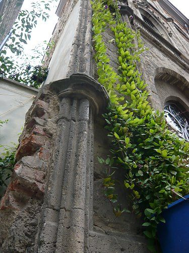 Wall greening with 'cup-and-saucer' (cathedral bell) vine