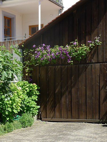 Wooden wall with clematis