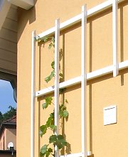 Trellis wall anchor for wooden trellises