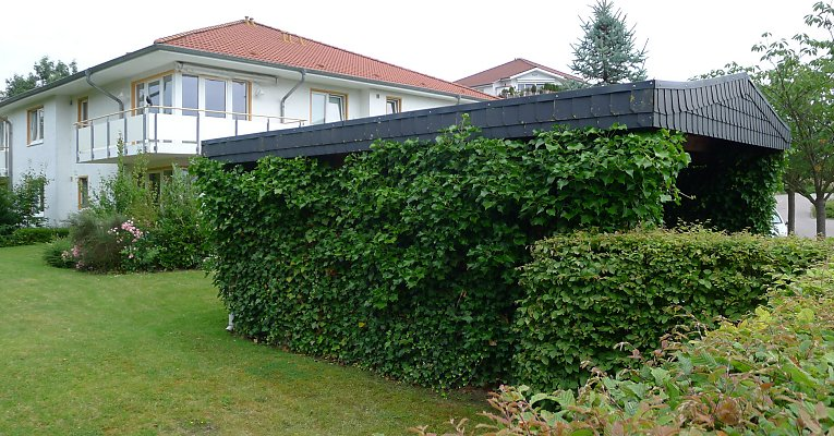 Carport covered with ivy on two sides