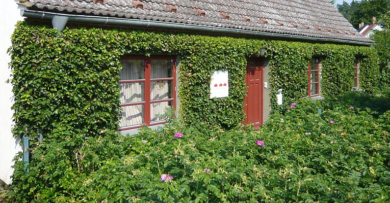 Full-surface facade greening with ivy