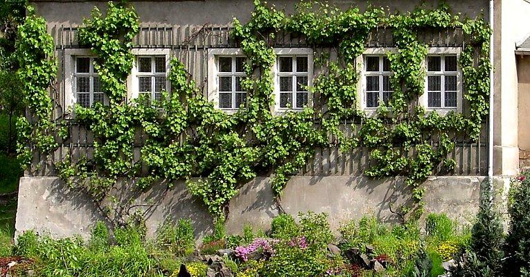 Construire Un Treillage D Espalier Pour Palisser Des Plantes Grimpantes Sur La Facade