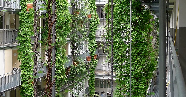 Pergola with twiners, industrial building in Leipzig /Saxony
