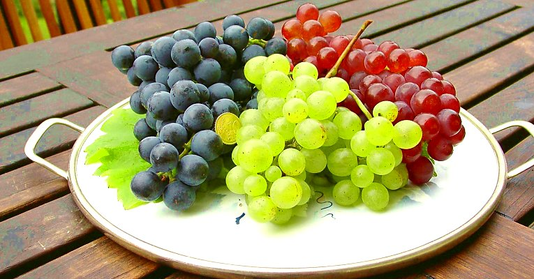 "Table grapes: ""Dornfelder,"" ""Phoenix,"" and ""Roter Gutedel"""