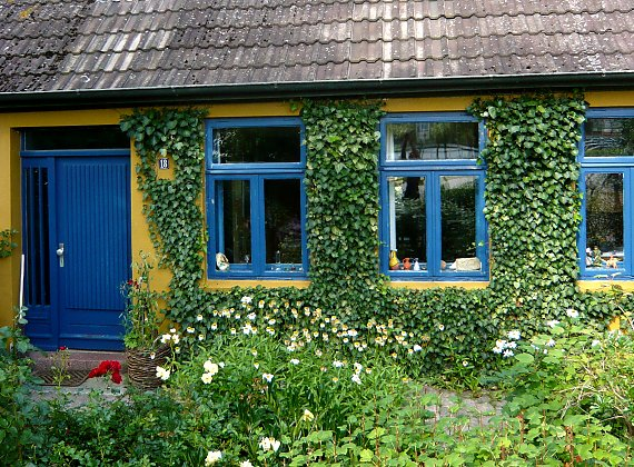 House greened with ivy