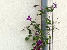Trellises for downpipes