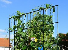 Standing metal trellis for climbing plants