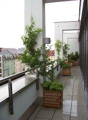 balkonbegr nung balkonbepflanzung mit balkonpflanzen. Black Bedroom Furniture Sets. Home Design Ideas