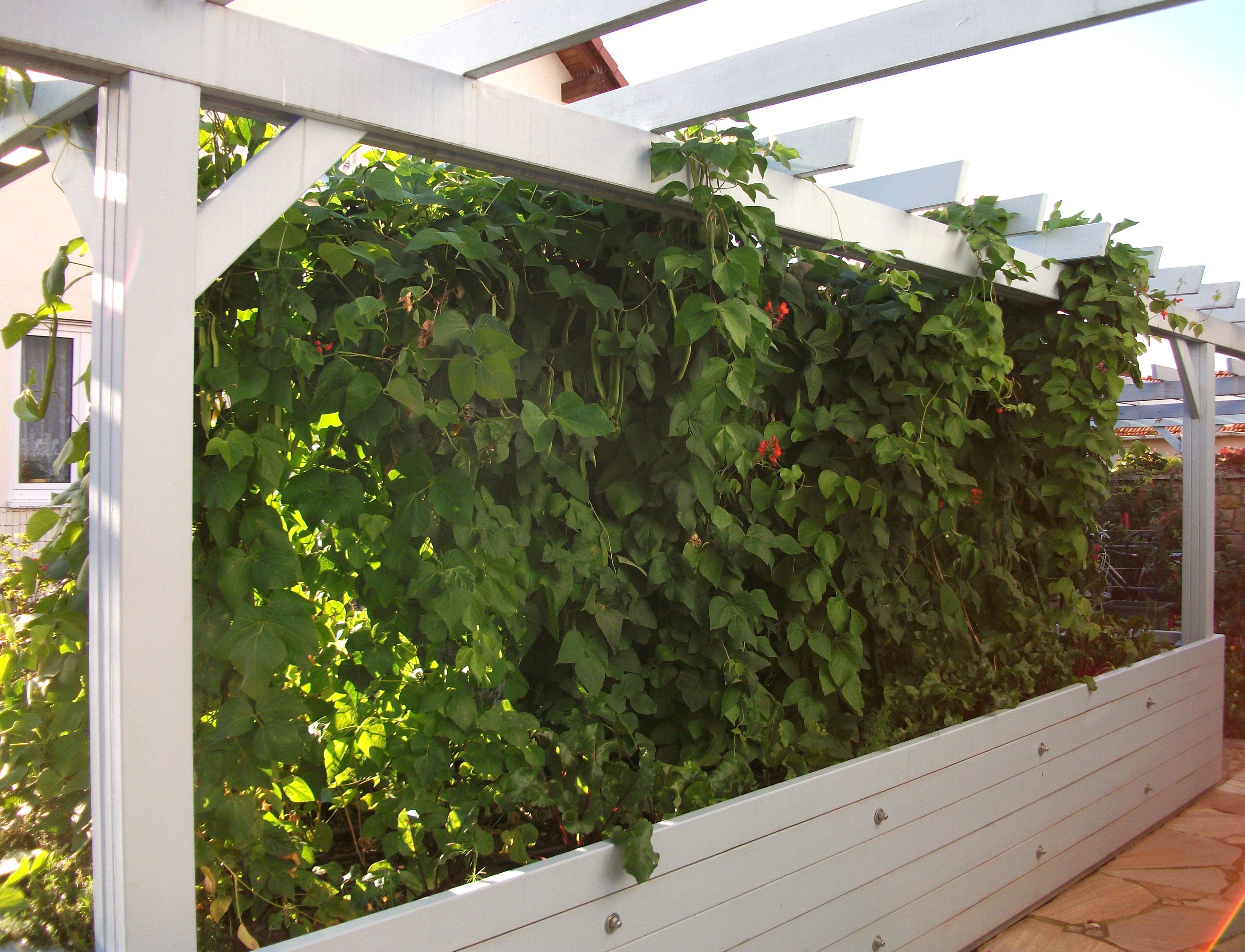 pergola am haus selbst bauen und begrünen, Gartengerate ideen