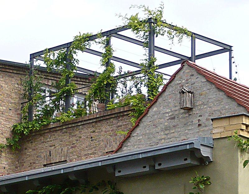 Pergola Am Haus Selbst Bauen Und Begrünen Pergola Bepflanzen Kletterpflanzen