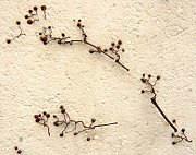 fassadenbegr nung bausch den durch efeu u a kletterpflanzen. Black Bedroom Furniture Sets. Home Design Ideas