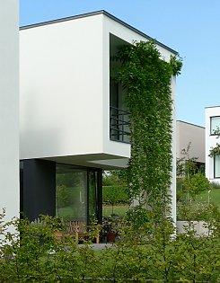 sichtschutz mit kletterpflanzen und begr nung. Black Bedroom Furniture Sets. Home Design Ideas
