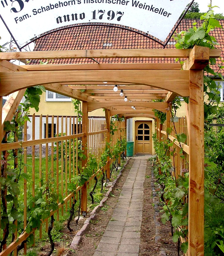 Laubengang Aus Holz Oder Metall Bauen Und Begrünen Pergola Bepflanzen Kletterpflanzen