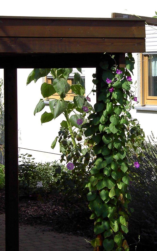 Blickdichte Carport-begrünung Mit Drahtseilen Gartenlaube Pergola Begrunen