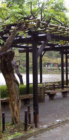 uralt blauregen an einer pergola im sankeien garden in yokohama japan foto regine hartkopf. Black Bedroom Furniture Sets. Home Design Ideas