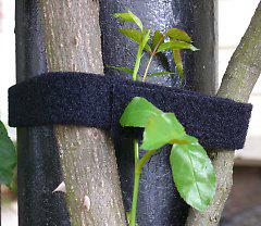bindematerial bindezubeh r f r kletterpflanzen und weinbau. Black Bedroom Furniture Sets. Home Design Ideas