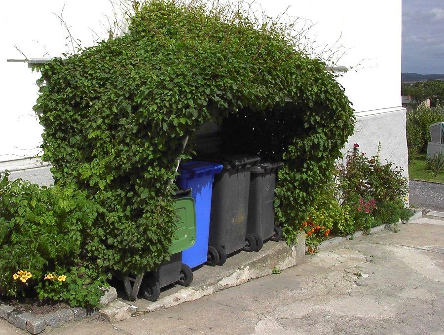 Pergola Am Haus Selbst Bauen Und Begrünen Gartenlaube Pergola Begrunen