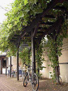 Wein Reben An Pergola Laubengang Carport Gartenlaube Pergola Begrunen