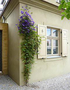 rankhilfe als drahtseilsystem grundform nr 1030. Black Bedroom Furniture Sets. Home Design Ideas
