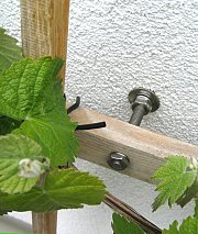 Hanger bolt as a trellis attachment