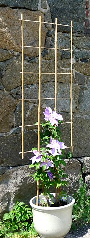 Bamboo trellis and clematis