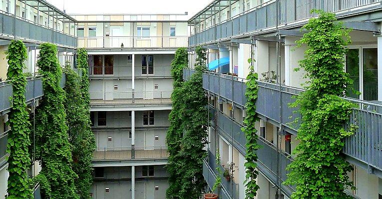Begrunung Von Fassaden Und Objekten Pflanzenwahl