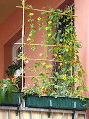 Espalier with tonkin clamp