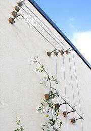 Wire rope trellis for clematis